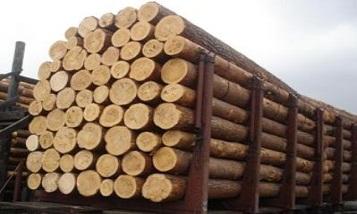 Россия устранила препятствие для поставок в Армению древесины через КПП Верхний Ларс